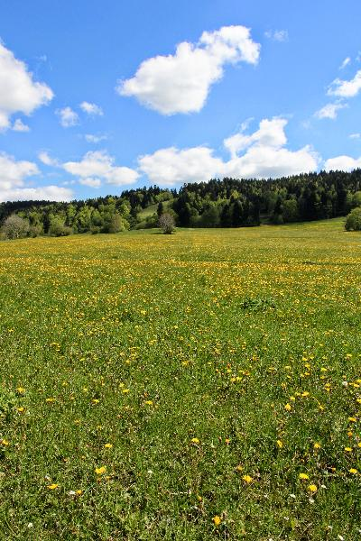 Le paysage est surtout composé de praires naturelles destinées au pâturage et à la fauche. (photos ©CIGC/Petit)