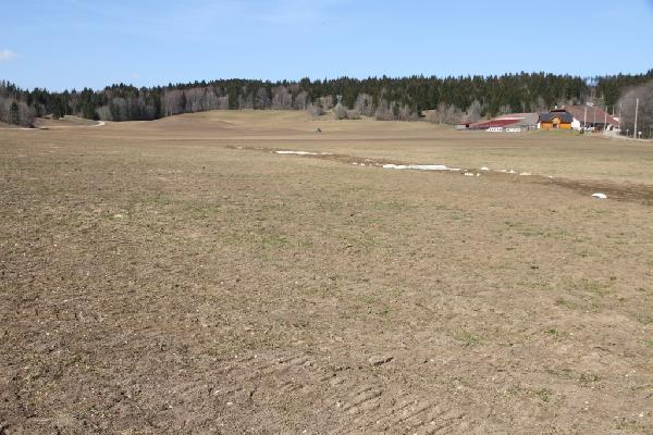Exemples de dégâts infligés par les campagnols sur une prairie (vue de loin)